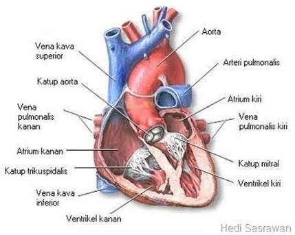 sayangi jantungmu