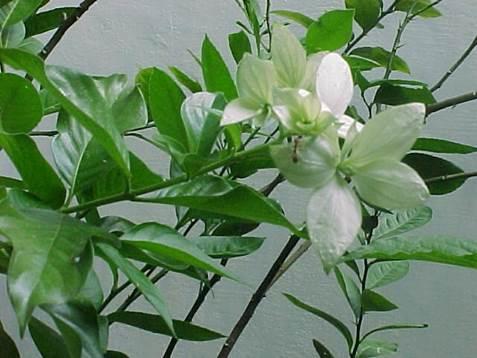 Nusa Indah Putih